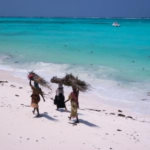 Zanzibar – kobiety niosące drewno